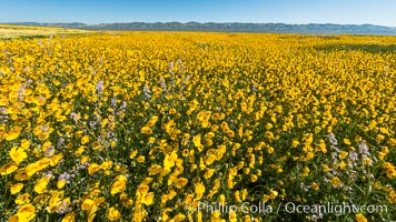 Wildflowers bloom across Carrizo Plains National Monument, during the 2017 Superbloom. Carrizo Plain National Monument, California, USA, natural history stock photograph, photo id 33232