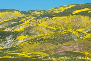 Wildflowers bloom across Carrizo Plains National Monument, during the 2017 Superbloom. Carrizo Plain National Monument, California, USA, natural history stock photograph, photo id 33234