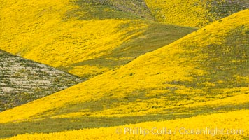 Wildflowers bloom across Carrizo Plains National Monument, during the 2017 Superbloom. Carrizo Plain National Monument, California, USA, natural history stock photograph, photo id 33244