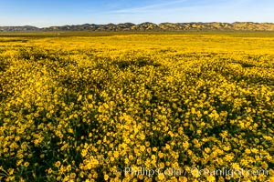 Wildflowers bloom across Carrizo Plains National Monument, during the 2017 Superbloom. Carrizo Plain National Monument, California, USA, natural history stock photograph, photo id 33245