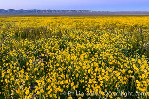 Wildflowers bloom across Carrizo Plains National Monument, during the 2017 Superbloom. Carrizo Plain National Monument, California, USA, natural history stock photograph, photo id 33249