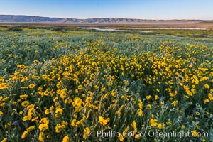 Wildflowers bloom across Carrizo Plains National Monument, during the 2017 Superbloom. Carrizo Plain National Monument, California, USA, natural history stock photograph, photo id 33253