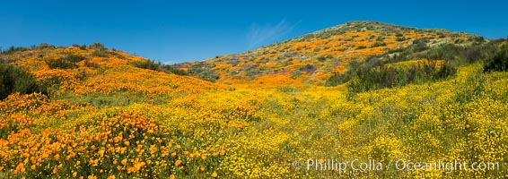 Wildflowers carpets the hills at Diamond Valley Lake, Hemet. Hemet, California, USA, natural history stock photograph, photo id 33136