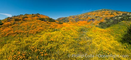 Wildflowers carpets the hills at Diamond Valley Lake, Hemet. Hemet, California, USA, natural history stock photograph, photo id 33138