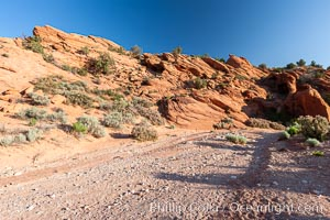 Wire Pass trail.  The Wire Pass trail runs along a river wash through sandstone bluffs and scattered trees and scrub brush. Wire Pass, Paria Canyon-Vermilion Cliffs Wilderness, Arizona, USA, natural history stock photograph, photo id 20746