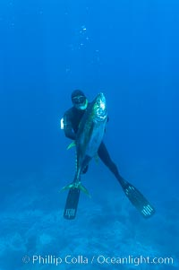 James Tate with yellowfin tuna (approx 60 pounds) taken by breathold diving with a band-power speargun near Abalone Point.  July 2004, Thunnus albacares, Guadalupe Island (Isla Guadalupe)
