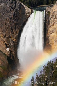 A rainbow appears in the mist of the Lower Falls of the Yellowstone River.  At 308 feet, the Lower Falls of the Yellowstone River is the tallest fall in the park.  This view is from Lookout Point on the North side of the Grand Canyon of the Yellowstone.  When conditions are perfect in midsummer, a midmorning rainbow briefly appears in the falls, Yellowstone National Park, Wyoming