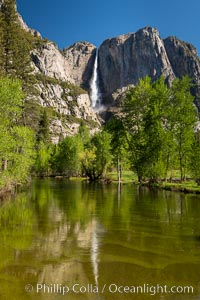 Yosemite Falls rises above the Merced River, viewed from the Swinging Bridge. The 2425' falls is the tallest in North America. Yosemite Falls, Yosemite National Park, California, USA, natural history stock photograph, photo id 34547