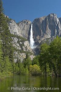 Yosemite Falls rises above the Merced River, viewed from the Swinging Bridge.  The 2425 falls is the tallest in North America.  Yosemite Valley, Yosemite National Park, California