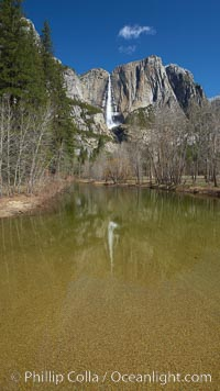 Yosemite Falls rises above the Merced River, viewed from Swinging Bridge, Yosemite National Park, California