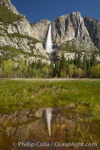 Yosemite Falls reflected in a meadow pool, spring, Yosemite National Park, California