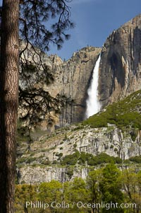 Yosemite Falls at peak flow in late spring, viewed from Cooks Meadow, Yosemite National Park, California