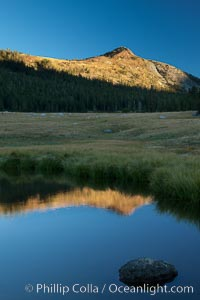 A Sierra Nevada Peak reflected in small tarn (pond), near Tioga Pass, Yosemite National Park, California