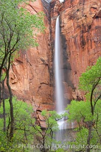 Waterfall at Temple of Sinawava during peak flow following spring rainstorm.  Zion Canyon.,  Copyright Phillip Colla, image #12450, all rights reserved worldwide.