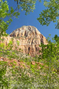 Red sandstone peaks above the Parus trail in Zion National Park