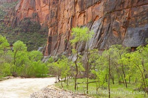 The Virgin River runs swift and deep following spring thunderstorms. The river is colored reddish-brown from the tons of red sandstone silt that it carries out of Zion Canyon as it slowly carves the canyon, Zion National Park, Utah