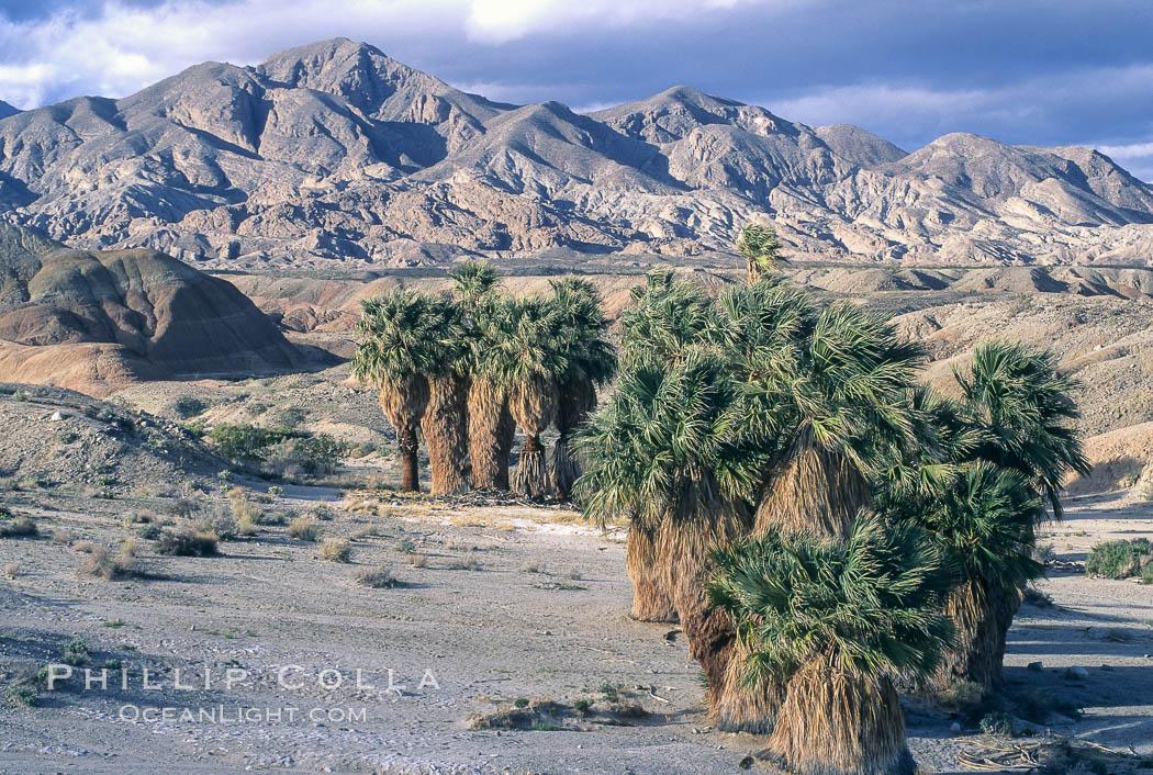 17 palms oasis anza borrego photo stock photo of 17