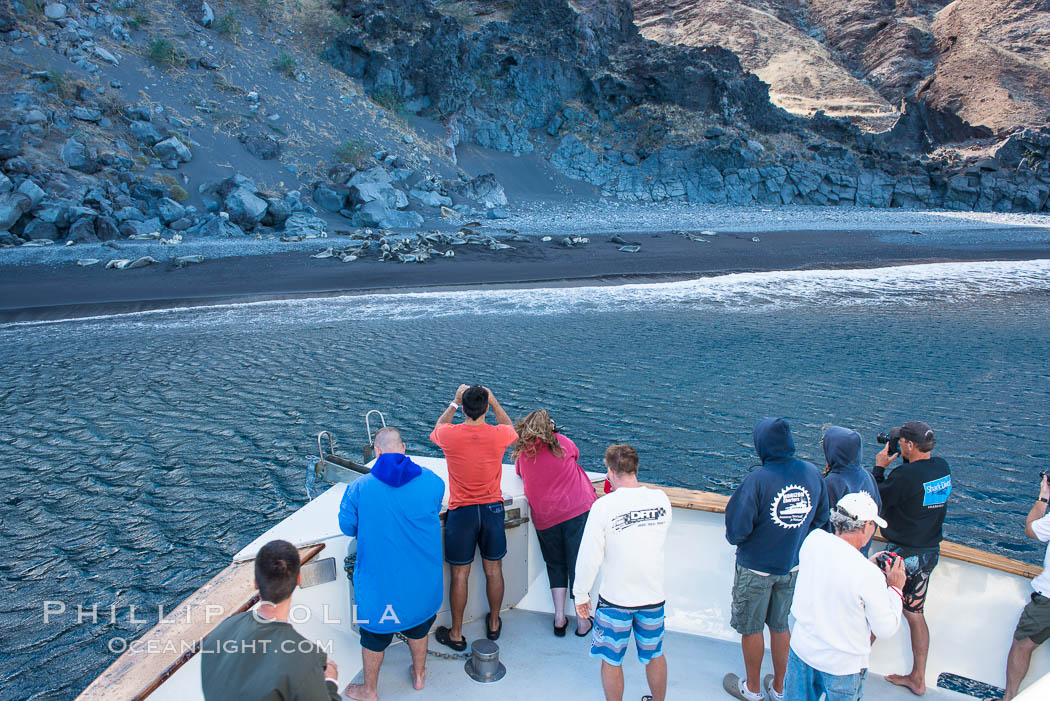 Viewing northern elephant seals along the beach, from the vessel Horizon, at Guadalupe Island. Guadalupe Island (Isla Guadalupe), Baja California, Mexico, natural history stock photograph, photo id 28776