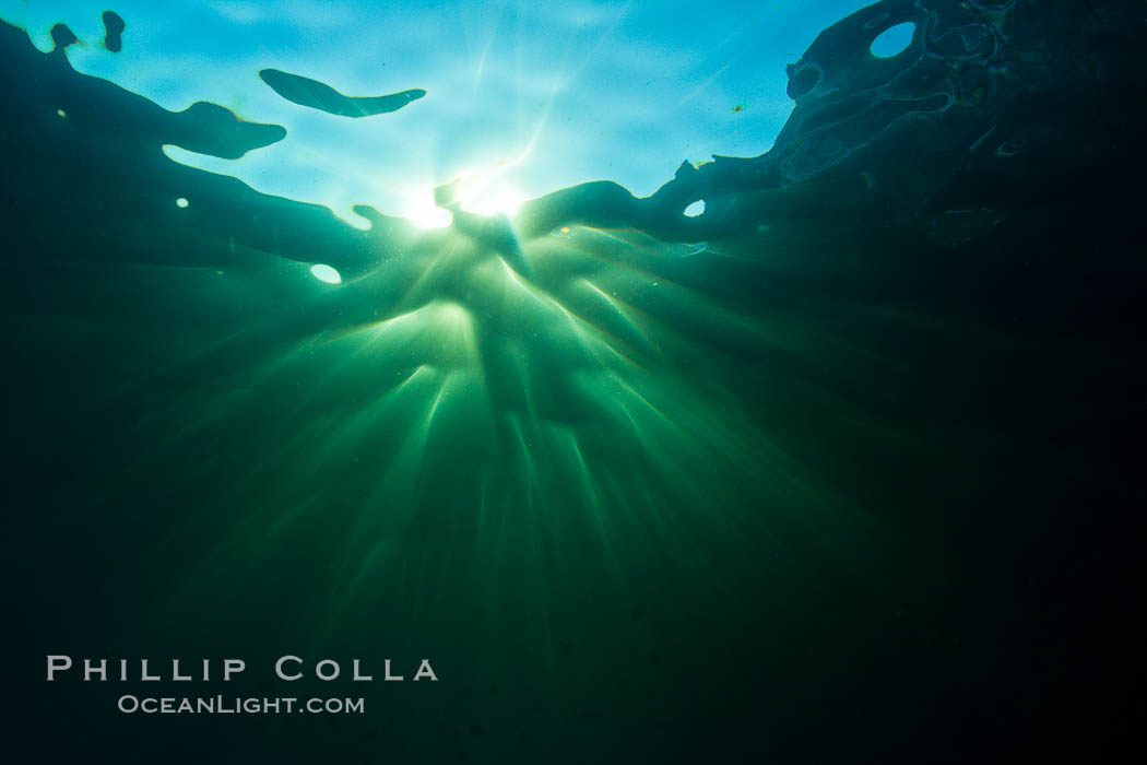 Beautiful underwater sunburst, glittering light through the ocean surface, Sea of Cortez, Baja California, Mexico. Sea of Cortez, Baja California, Mexico, natural history stock photograph, photo id 27562