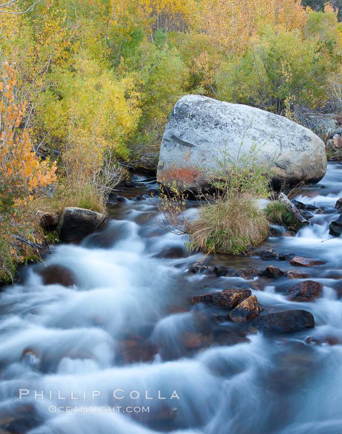 Bishop creek and turning aspens, south fork of Bishop Creek in the eastern Sierra Nevada, Populus tremuloides, Bishop Creek Canyon Sierra Nevada Mountains