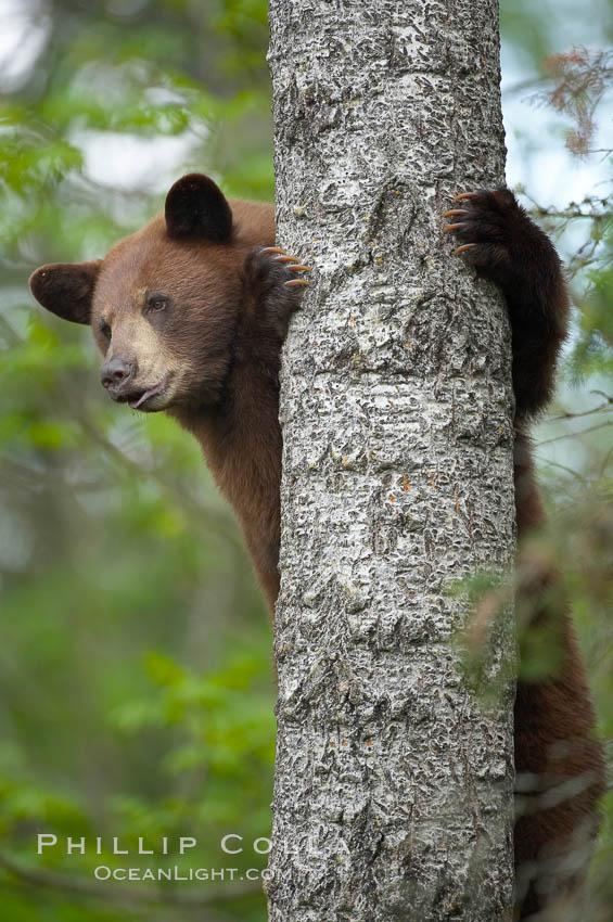 black bear natural history photography blog