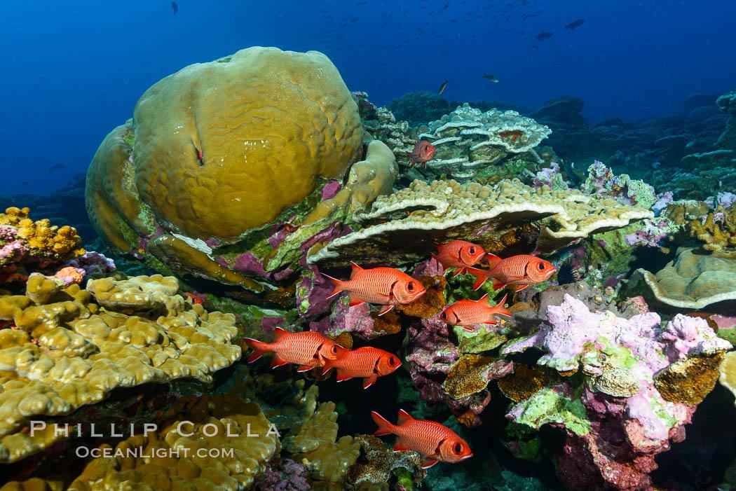 Blotcheye soldierfish and Clipperton Island coral reef, Porites sp, Porites lobata, Porites arnaudi
