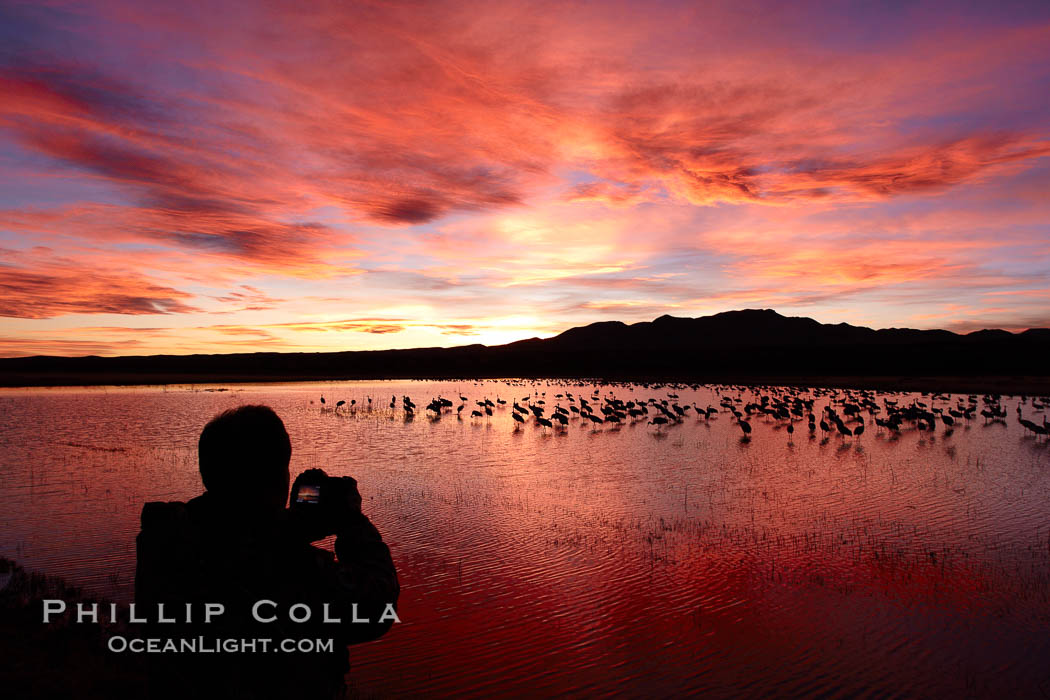 A photographer looks on the back of his camera to view his perfect image of yet another beautiful sunset at Bosque del Apache National Wildlife Refuge, Grus canadensis, Socorro, New Mexico