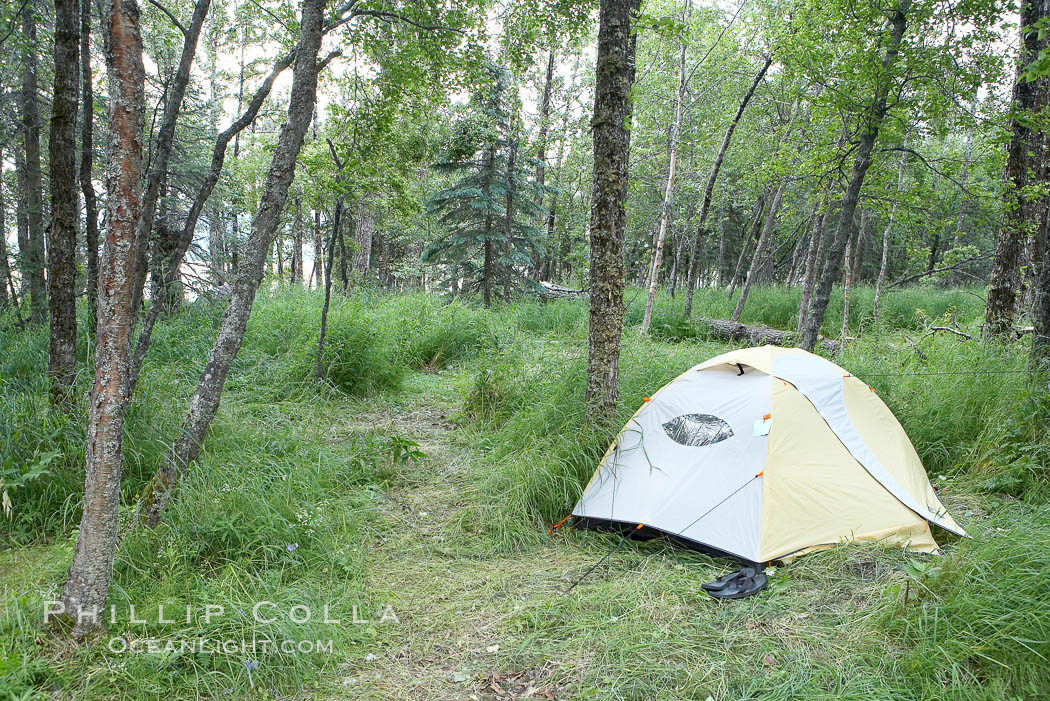 My campsite. Brooks Camp, Katmai National Park, Alaska, USA, natural history stock photograph, photo id 17386