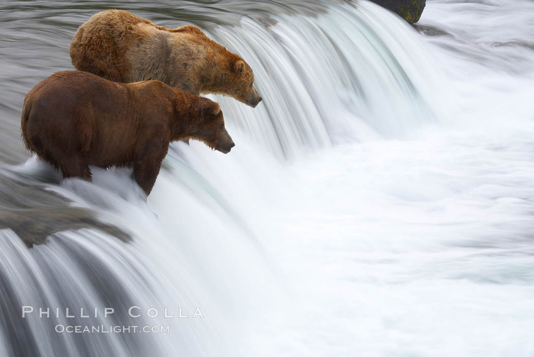 Two brown bears wait for salmon at Brooks Falls. Blurring of the water is caused by a long shutter speed. Brooks River, Ursus arctos, Katmai National Park, Alaska