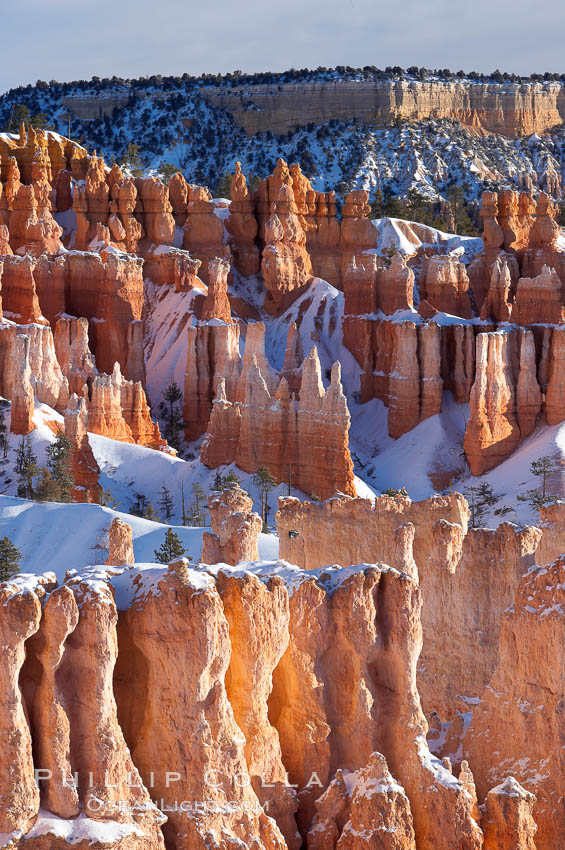 Bryce Canyon hoodoos line all sides of the Bryce Amphitheatre. Bryce Canyon National Park, Utah, USA, natural history stock photograph, photo id 18638