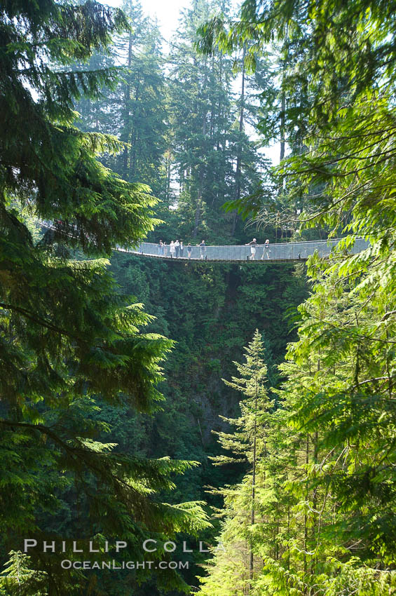 Capilano Suspension Bridge, 140 m (450 ft) long and hanging 70 m (230 ft) above the Capilano River.  The two pre-stressed steel cables supporting the bridge are each capable of supporting 45,000 kgs and together can hold about 1300 people.,  Copyright Phillip Colla, image #21144, all rights reserved worldwide.