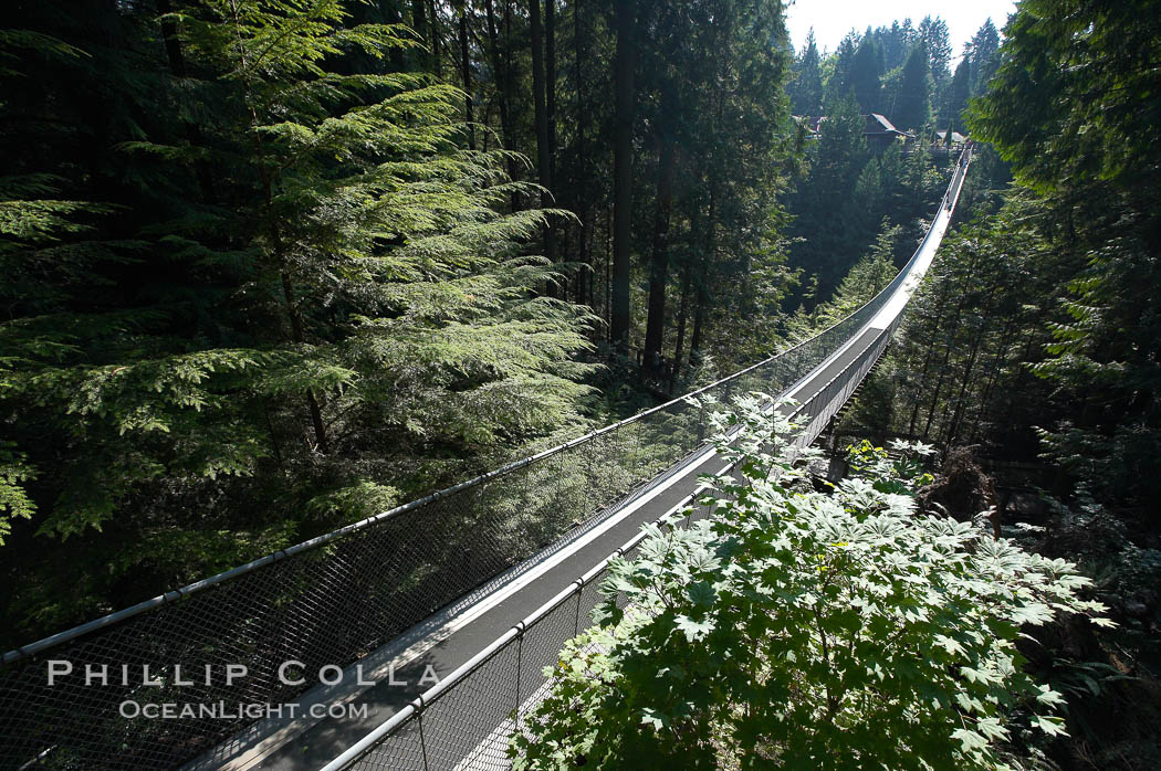 Capilano Suspension Bridge, 140 m (450 ft) long and hanging 70 m (230 ft) above the Capilano River.  The two pre-stressed steel cables supporting the bridge are each capable of supporting 45,000 kgs and together can hold about 1300 people.,  Copyright Phillip Colla, image #21143, all rights reserved worldwide.