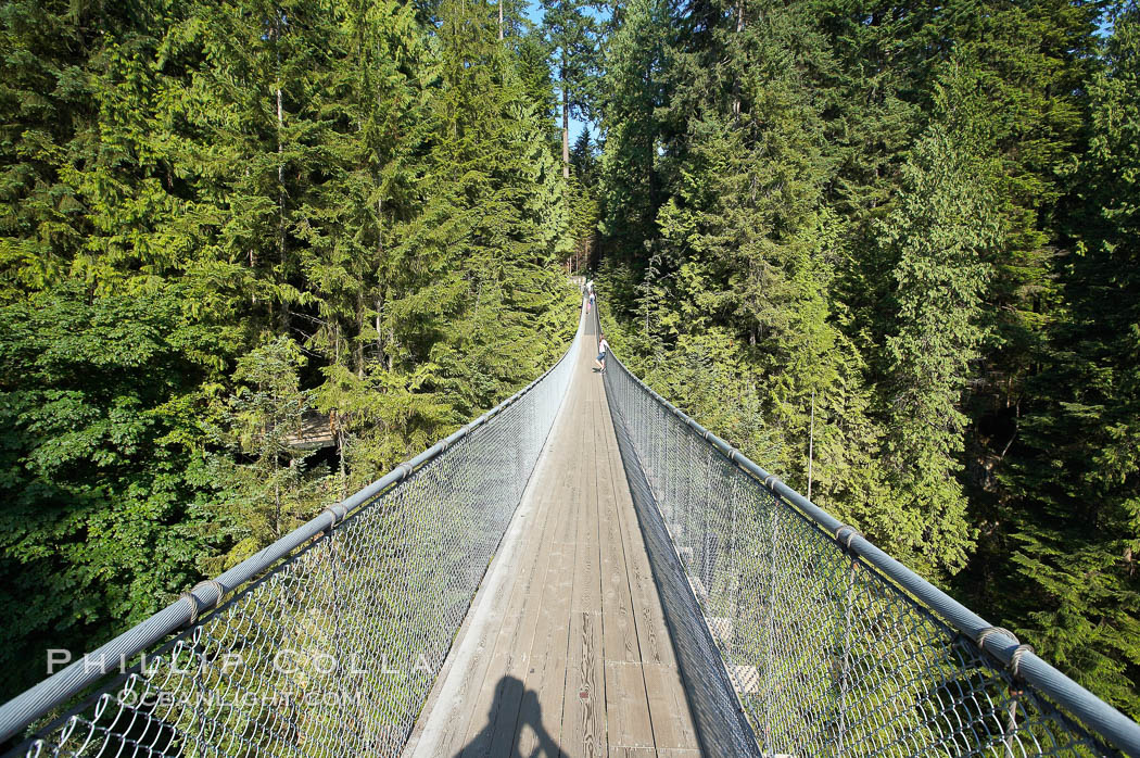 Capilano Suspension Bridge, 140 m (450 ft) long and hanging 70 m (230 ft) above the Capilano River.  The two pre-stressed steel cables supporting the bridge are each capable of supporting 45,000 kgs and together can hold about 1300 people.,  Copyright Phillip Colla, image #21147, all rights reserved worldwide.