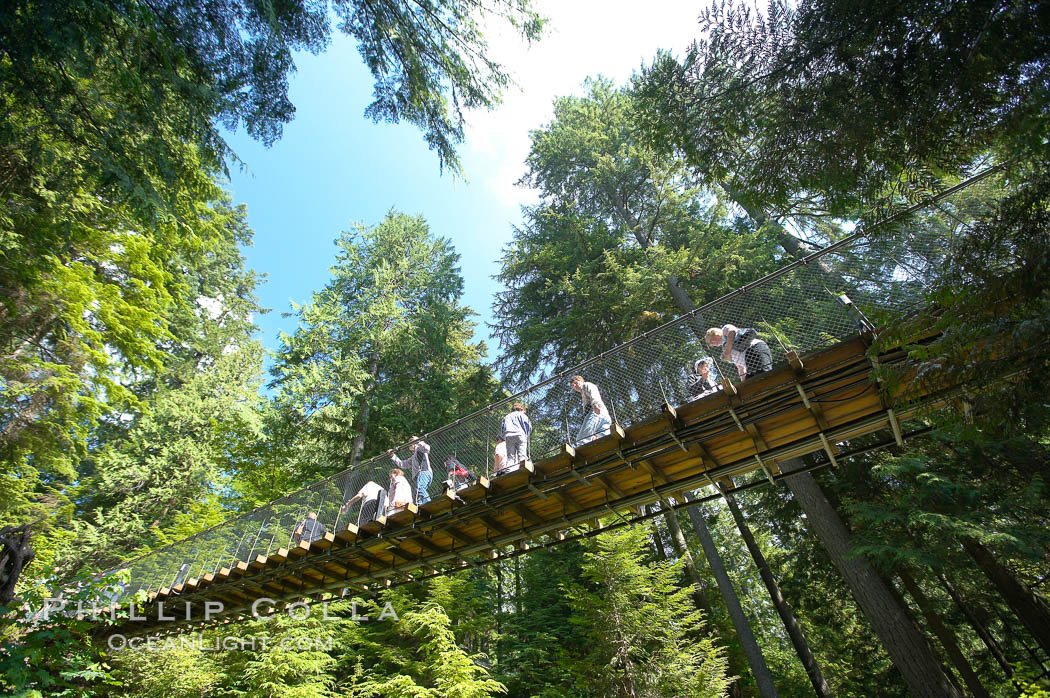 Capilano Suspension Bridge, 140 m (450 ft) long and hanging 70 m (230 ft) above the Capilano River.  The two pre-stressed steel cables supporting the bridge are each capable of supporting 45,000 kgs and together can hold about 1300 people.,  Copyright Phillip Colla, image #21145, all rights reserved worldwide.
