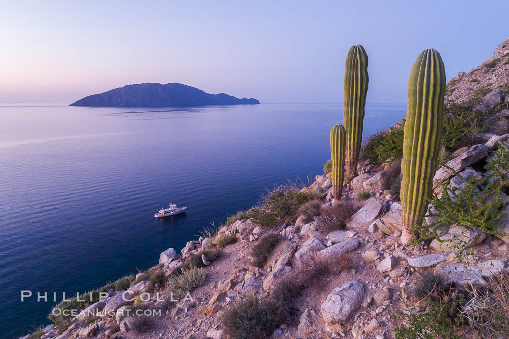 Cardon Cactus on Isla San Diego, Aerial View, Baja California. Isla San Diego, Baja California, Mexico, natural history stock photograph, photo id 33578
