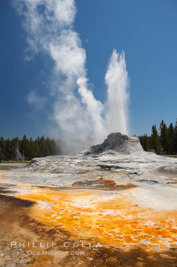 Castle Geyser erupts with the colorful bacteria mats of Tortoise Shell Spring in the foreground.  Castle Geyser reaches 60 to 90 feet in height and lasts 20 minutes.  While Castle Geyser has a 12 foot sinter cone that took 5,000 to 15,000 years to form, it is in fact situated atop geyserite terraces that themselves may have taken 200,000 years to form, making it likely the oldest active geyser in the park. Upper Geyser Basin. Upper Geyser Basin, Yellowstone National Park, Wyoming, USA, natural history stock photograph, photo id 13426