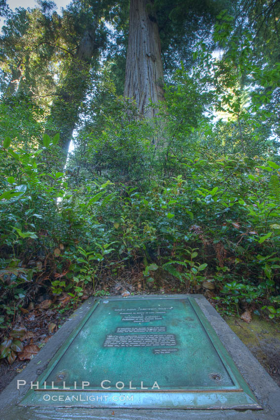 Commemoration plaque in Lady Bird Johnson Grove, marking the place where President Richard Nixon dedicated this coastal redwood grove to Lady Bird Johnson, an environmental activist and former first lady. Redwood National Park, California, USA, Sequoia sempervirens, natural history stock photograph, photo id 25808