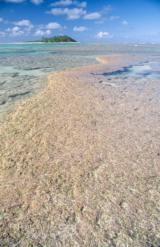 coralline algae reef. Rose Atoll National Wildlife Sanctuary, American Samoa, USA, Porolithon, natural history stock photograph, photo id 00729