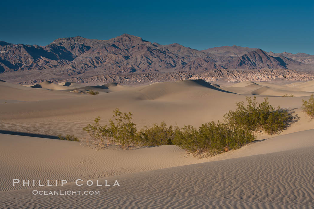 Sand Dunes, California.  Near Stovepipe Wells lies a region of sand dunes, some of them hundreds of feet tall. Stovepipe Wells, Death Valley National Park, California, USA, natural history stock photograph, photo id 15603