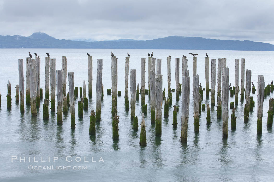 Derelict pilings, remnants of long abandoned piers.,  Copyright Phillip Colla, image #19388, all rights reserved worldwide.