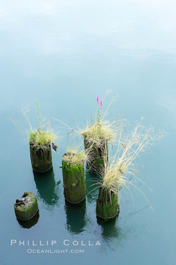 Derelict pilings, remnants of long abandoned piers.,  Copyright Phillip Colla, image #19383, all rights reserved worldwide.