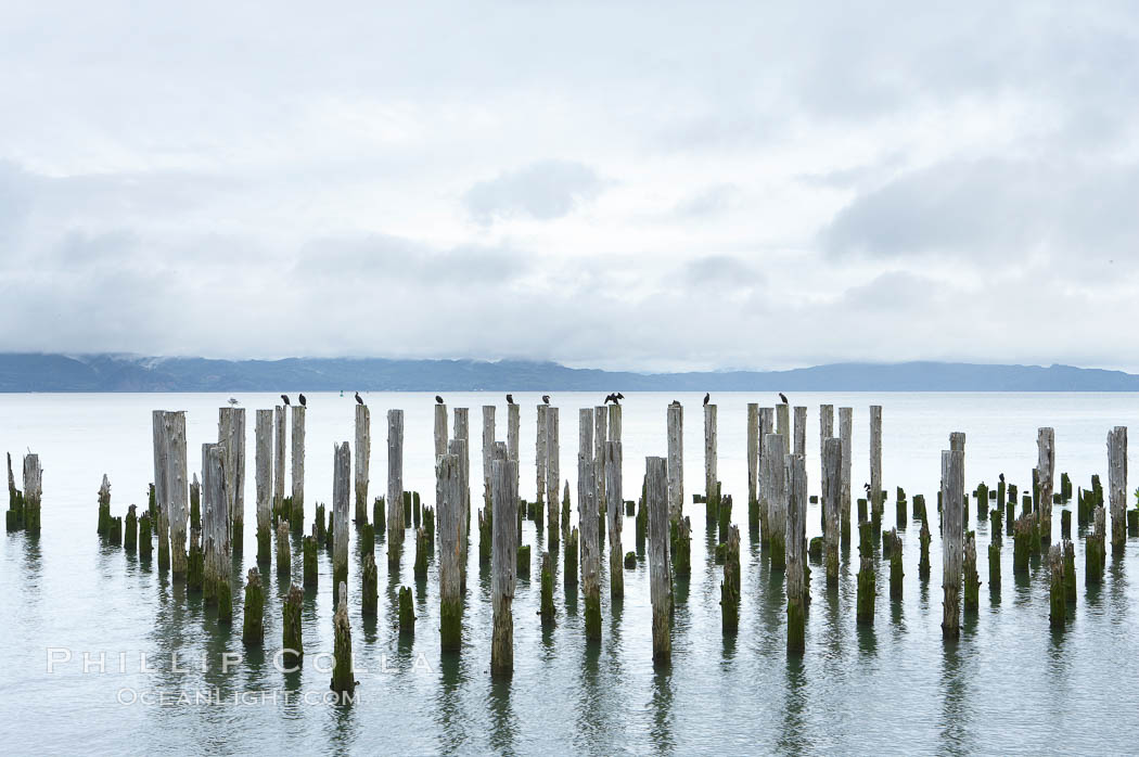 Image 19385, Derelicts pilings, remnants of long abandoned piers. Columbia River, Astoria, Oregon, USA