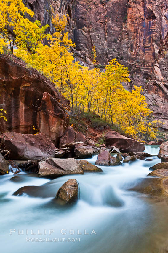 Image 26116, The Virgin River flows by autumn cottonwood trees, part of the Virgin River Narrows.  This is a fantastic hike in fall with the comfortable temperatures, beautiful fall colors and light crowds. Virgin River Narrows, Zion National Park, Utah, USA