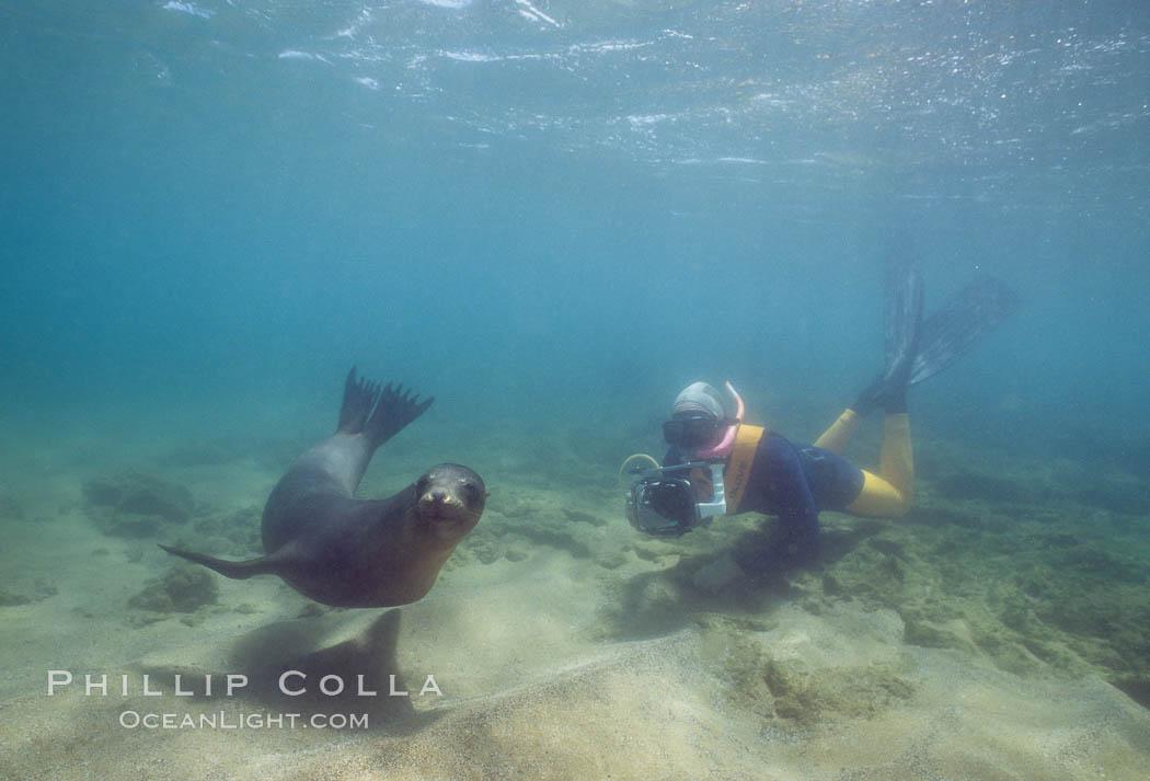 Galapagos sea lion, Sullivan Bay. James Island, Galapagos Islands, Ecuador, Zalophus californianus wollebacki, Zalophus californianus wollebaeki, natural history stock photograph, photo id 01700