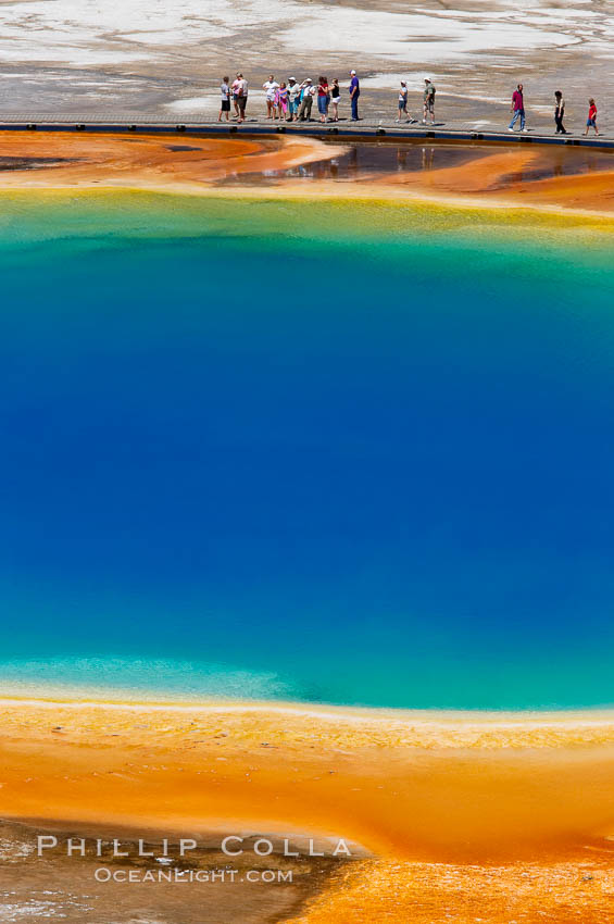 Grand Prismatic Spring displays a stunning rainbow of colors created by species of thermophilac (heat-loving) bacteria that thrive in narrow temperature ranges.  The blue water in the center is too hot to support any bacterial life, while the outer orange rings are the coolest water.  Grand Prismatic Spring is the largest spring in the United States and the third-largest in the world.  Midway Geyser Basin.,  Copyright Phillip Colla, image #13573, all rights reserved worldwide.