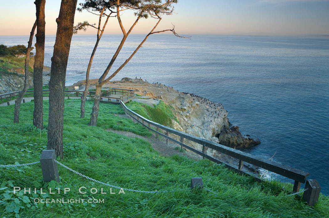 Bluff and trees overlooking the ocean near La Jolla Cove, sunrise