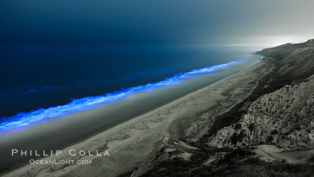 Lingulodinium polyedrum red tide dinoflagellate plankton, glows blue when it is agitated in wave and is visible at night. La Jolla, California, USA, Lingulodinium polyedrum, natural history stock photograph, photo id 27062