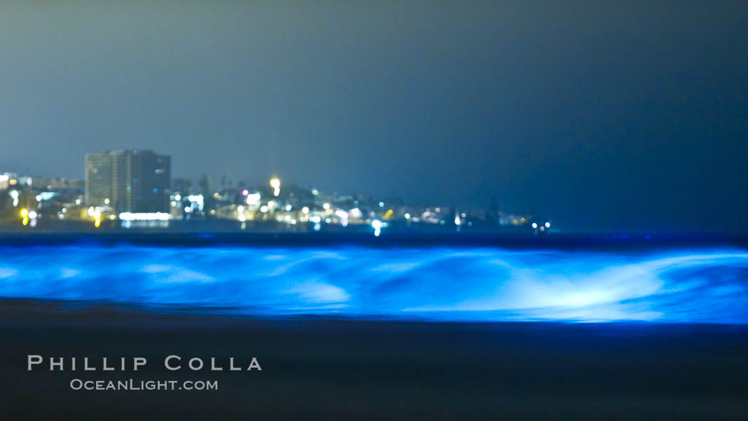 Lingulodinium polyedrum red tide dinoflagellate plankton, glows blue when it is agitated in wave and is visible at night, Lingulodinium polyedrum, La Jolla, California