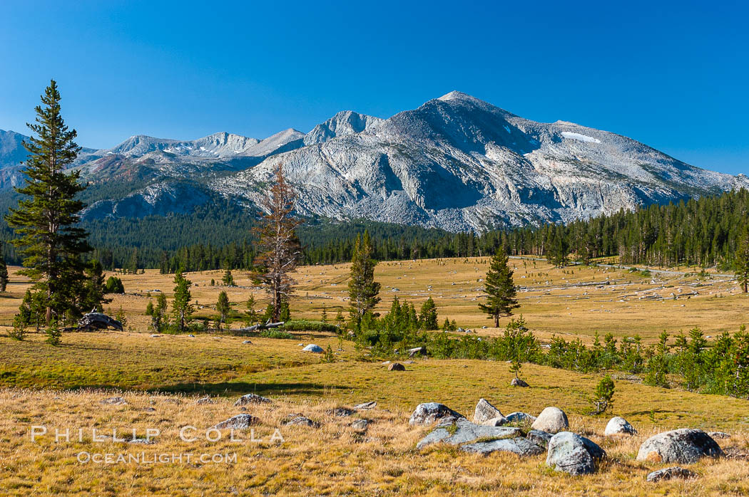 Mammoth Peak and alpine meadows in the High Sierra, viewed from the Tioga Pass road just west of the entrance to Yosemite National Park. Late summer. Yosemite National Park, California, USA, natural history stock photograph, photo id 09953