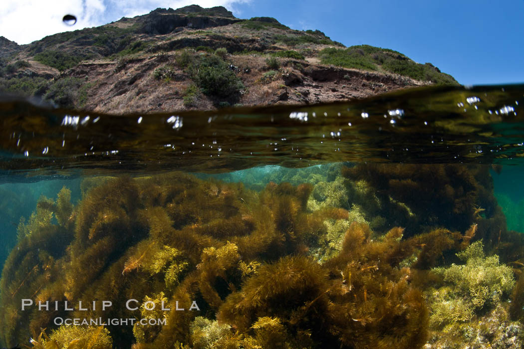 Marine algae cover the rocky reef. San Clemente Island, California, USA, natural history stock photograph, photo id 25416